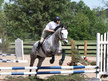 Sweet, Athletic TB Hunter/Jumper, Eventer