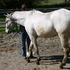 Athletic Appaloosa Gelding