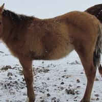 MAKE AN OFFER!!!  Cute dun colt