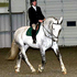 17. 2 Hand Gray Approved Irish Draught Stallion At Stud