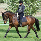 2006 16.2H Bay Irish Sporthorse Mare