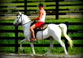 STYLISH/GREAT BLOODLINES/Nice Trailhorse with good motor