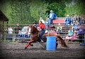 Money Earning Head & Heel,barrels Gelding !!