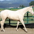sired by World Champion Severance Chex