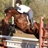 Lovely mover, phenomenal jump! Large 6 yr German Sport Pony