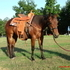 *May Trade***5yr old Cow Horse