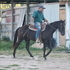 Black Gelding - All around prospect !