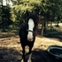 Beautiful shire mare for sale