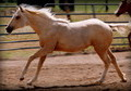 SOLD _Heres a good one!-world class prospect ----reining, working cow,roping, etc