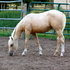 world class prospect ----reining, working cow,roping, etc
