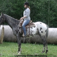 Horses for sale Quiet Riding Geldings