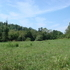 86.54 AC. - Wilkes County, NC