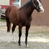 Classy stallion sired by World Champion
