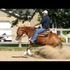 Finished Reining Derby Gelding Open/Non Pro