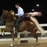 Gorgeous gaited gelding
