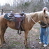 PALAMINO PONY HUNTER PROSPECT