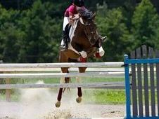 training level eventer and fantastic showjumper!