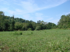 86. 54 Acres in Wilkes County, NC