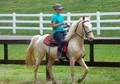 Cremello Gelding -Smart, Gaited, Willing