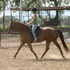 Superior Warmblood Mare