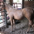 2014 AQHA Foals~ Only 2 left! & 1 ApHC foal