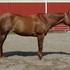 Beautiful All-Around AQHA Incentive Fund Chestnut Show Mare - HUS Deluxe!