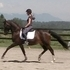 Stunning 3rd level mare PRICE REDUCED