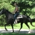 Beautiful, SO sweet -Awesome Trail Mare - Stands to mount and waits to be told to move!!