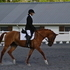 Beautiful mare for sale, a great all around horse!