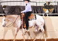 ApHC Proven Show Gelding, Perfect For Youth!
