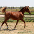 Gorgeous Purebred colt, excellent pleasure and sport prospect.