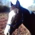 Wonderful Trail Horse For Sale