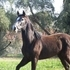AZTECA FILLY, energetic, beautiful