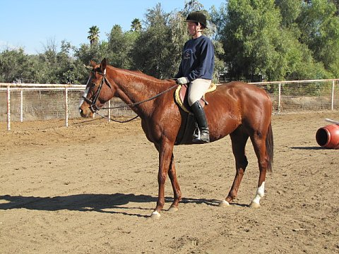 fantastic mare jumps super sweet all around amazing comfortable ride