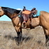Fancy 7 yr old BUCKSKIN Gelding-Ranch/Trail/Reining! Twombly Horse Sale!