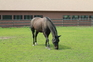 Idyllic equestrian farm for sale in United States of America