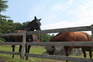 Idyllic equestrian farm for sale