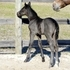 Blue Roan Appy 2 for 1 Package