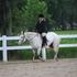 Trail, show, 4-H, Youth, Gymkhana, Broodmare-8 year old POA mare