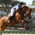 Eventer, Jumper, Dressage prospect