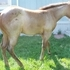 Make an offer, Hancock/Poco Bueno Foundation Filly