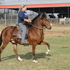 Fancy gelding for show or trail