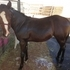 Beautiful 7 month old filly by