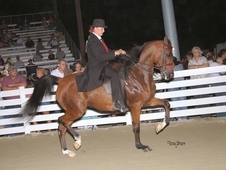 Champion Arabian English Pleasure Mare