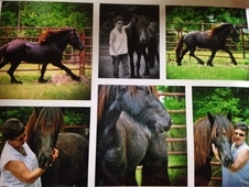 Mini Fresian a rare Dales Pony only 2800 world wide. Looks like a...