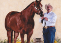 Superior Halter Horse That Rides For Sale