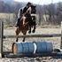 Athletic prospect for eventing/jumpers