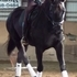 DUTCHY - Elegant, black 17hh Dressage