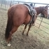 8 yr old AQHA Flunked Out Cutter Gelding