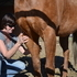 Equine Massage Therapy/Acupressure